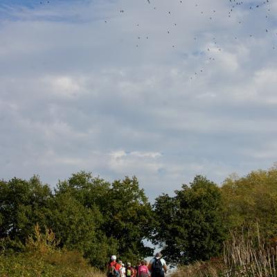 Vol de palombes au-dessus des marcheurs