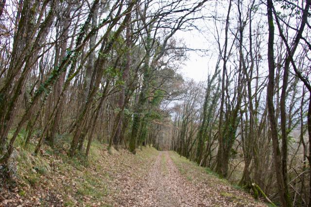 Le chemin à travers un sous-bois dépourvu de feuillage