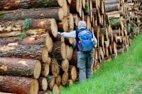 Comptage des années pour ces arbres !