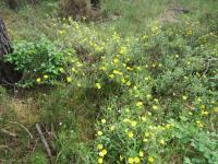 Forêt de Campet le 13 mai